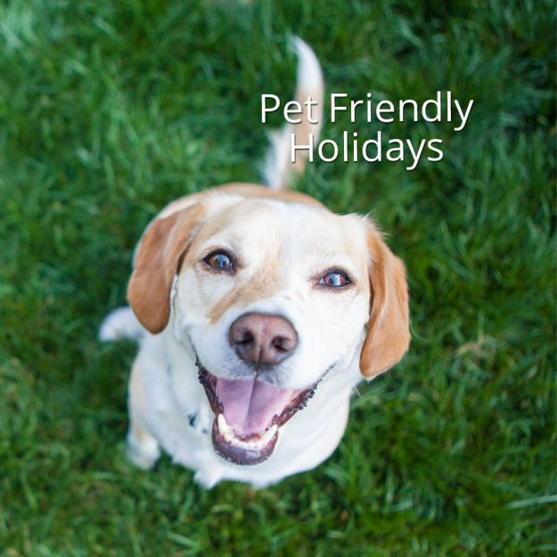 pet-friendly-holidays-BL